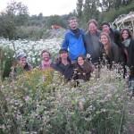 gruppo volontariato Bristol UE