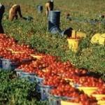 reati penali agricoltura caporalato