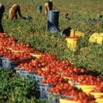 I reati penali in agricoltura