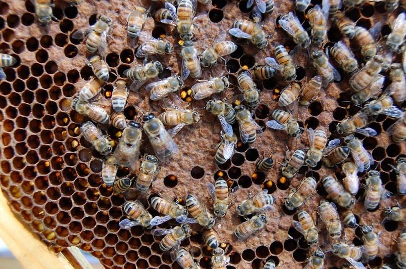 api alveare apicoltura eretica