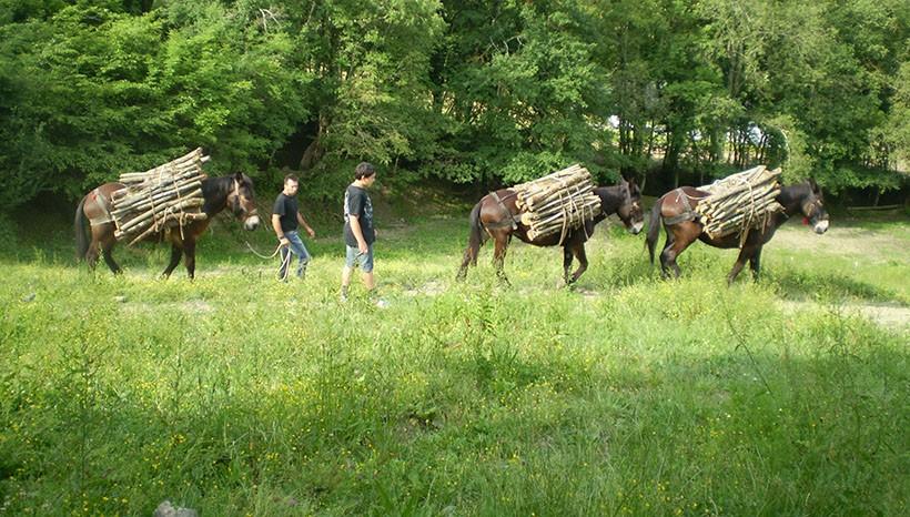 mulo soma esbosco legna