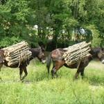 mulo esbosco legna