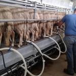 La Zootecnica nel settore agroalimentare italiano