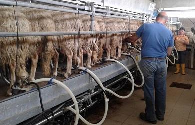 La zootecnica nel settore agroalimentare italiano for Rivista di programmi domestici