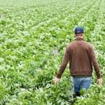 fiscalità agricoltura