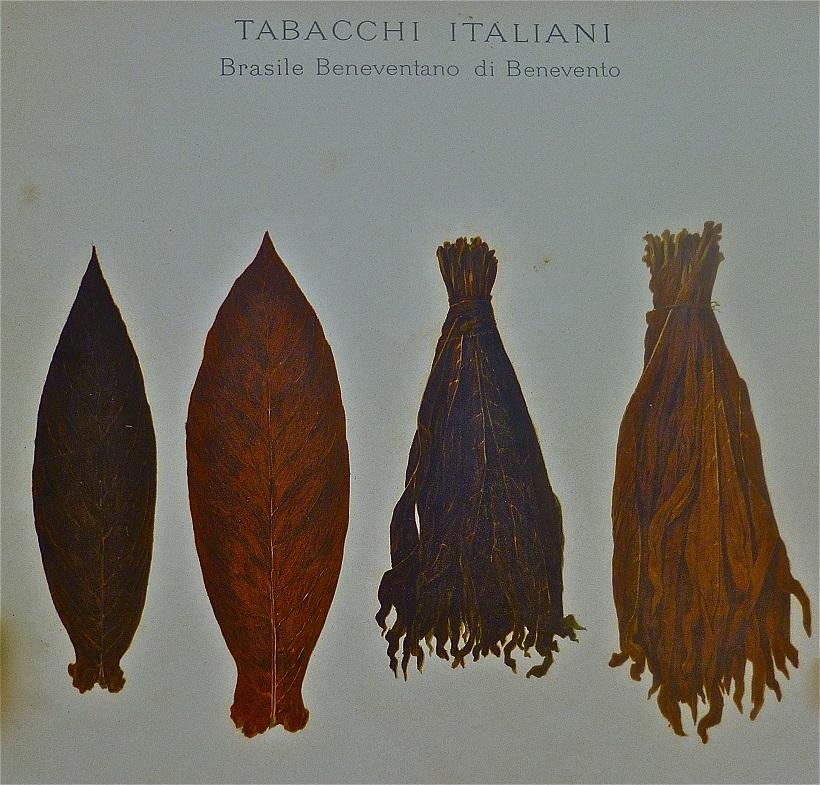 tabacco foglie brasile