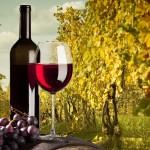 vino immagine