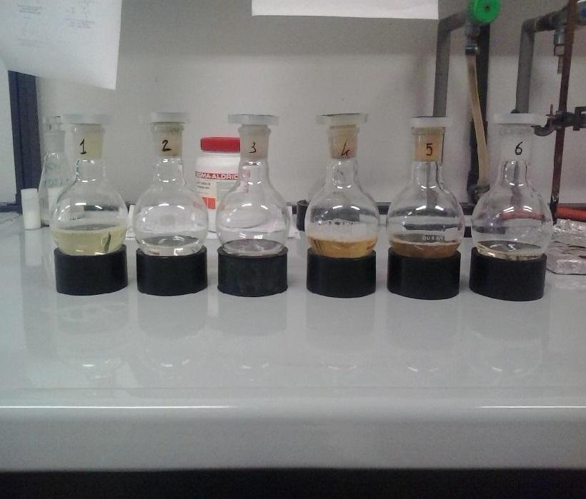 Variabilità in campioni di Bava di H. aspersa