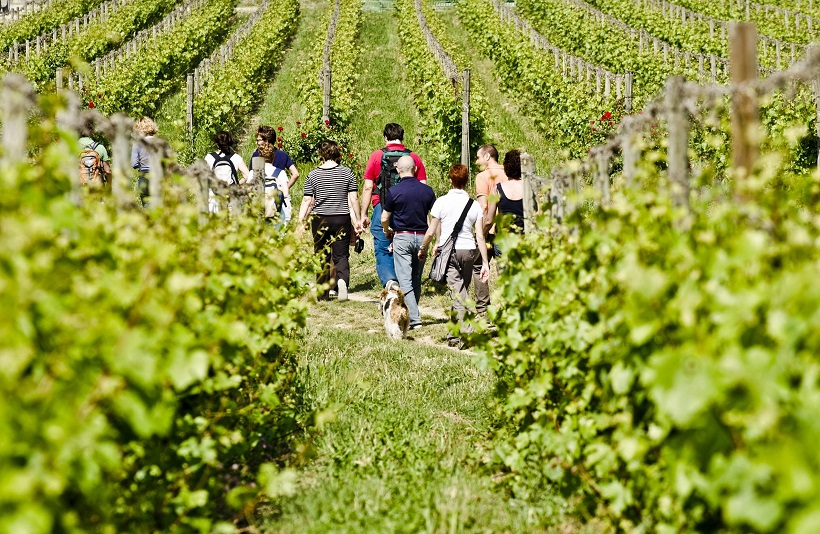 enoturismo vino agricoltura