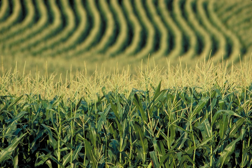 agricoltura farmers americani