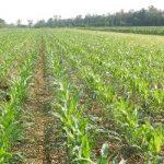 L'Agricoltura conservativa: sostenibilità e competitività nella gestione del suolo