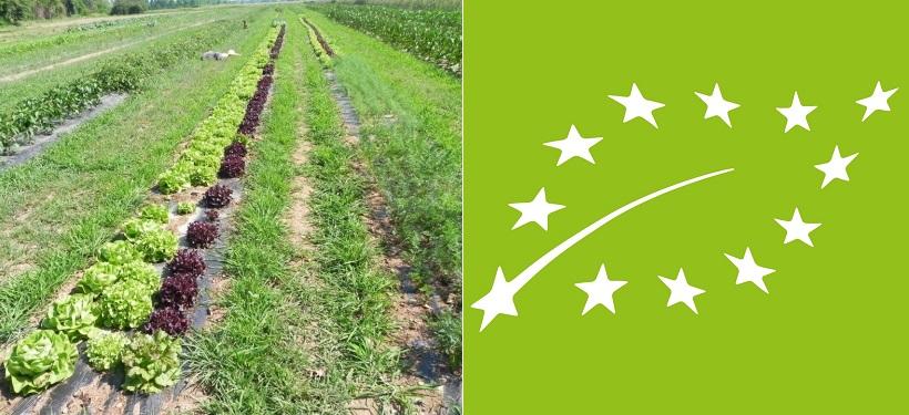 conversione biologico agricoltura
