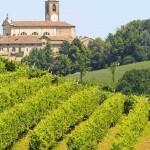 oltrepo pavese vino uva vigna