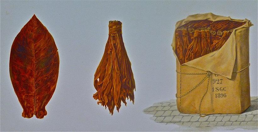 foglia tabacco sardegna