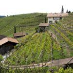 Vigna in Alto Adige