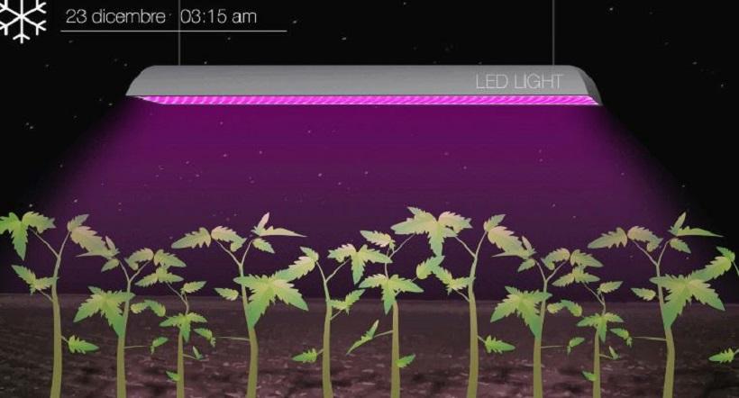 Lampade Led Piante: Bulbo lampade a led per le piante di casa.