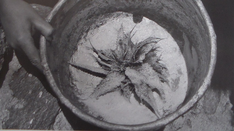 filtrazione latte ortica foglie