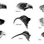 """Gli uccelli: creature """"sdentate"""""""