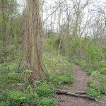 paesaggio firenze boschi foreste parigi