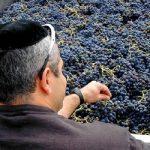 vino ebrei kosher certificato ebraico