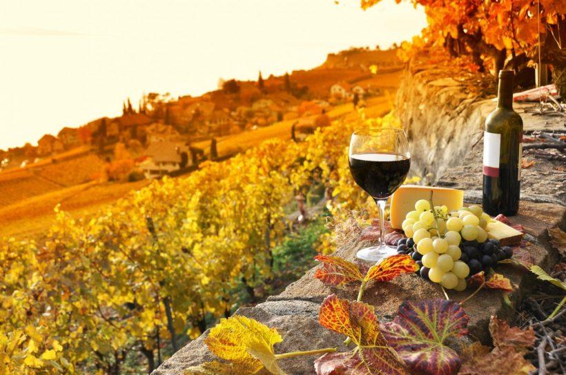 vino marketing esperienziale aziende agricole agricoltura