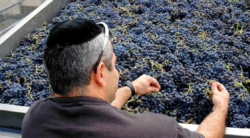 vino koscher italiano