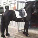La sella e la schiena del cavallo
