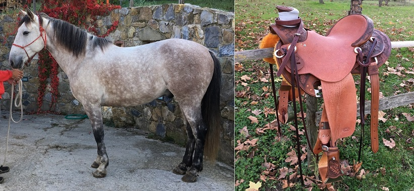 sella stretta cavallo mulo