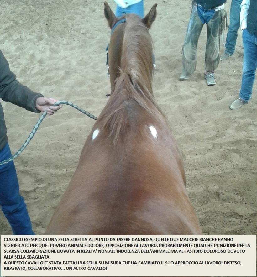 sella stretta danni schiena cavallo