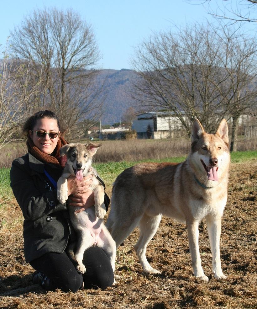 cane lupo di saarloos famiglia sociale