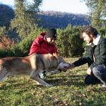 cane lupo di saarloos carattere sociale