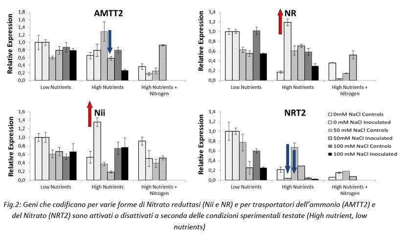 geni pomodoro nitrato riduttasi ammonio