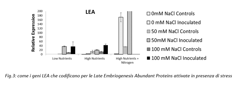 Late Embriogenesis Abundant Proteins