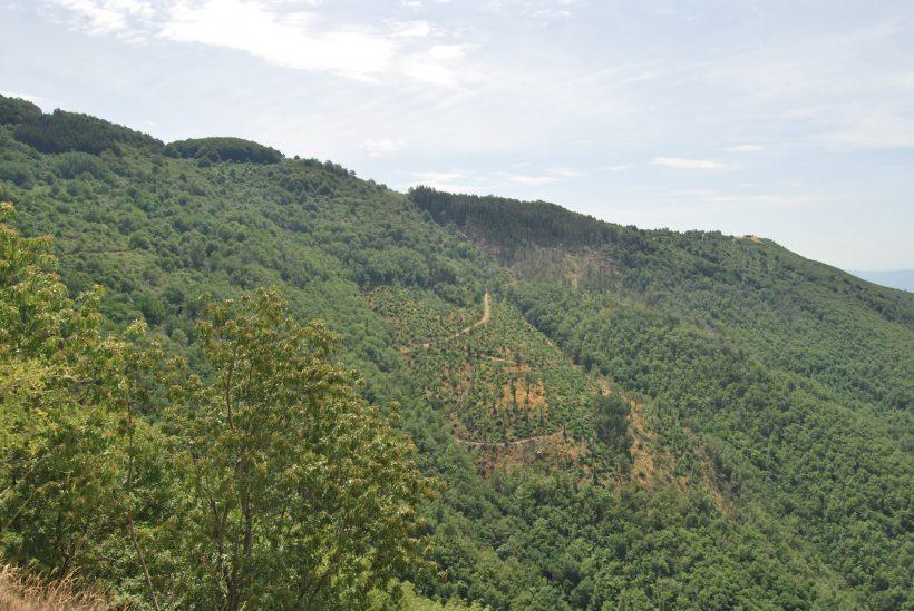 bosco assestamento foresta sant'antonio reggello casentino valdarno alberi pianificazione produttiva legno utilizzazione