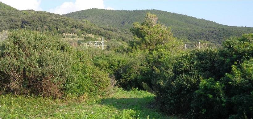 monti livornesi boschi storia agricoltura coltivazioni