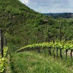 Cambiamenti nella naturalità dei paesaggi agrari toscani dal 1933 al 2016