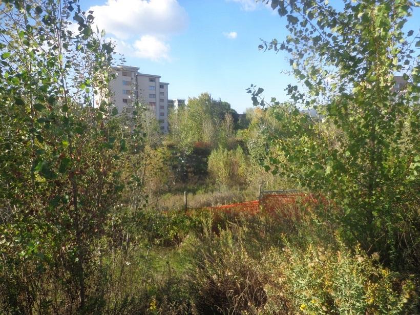 alberature firenze alberi aree degradate salvaguardia ambiente verde