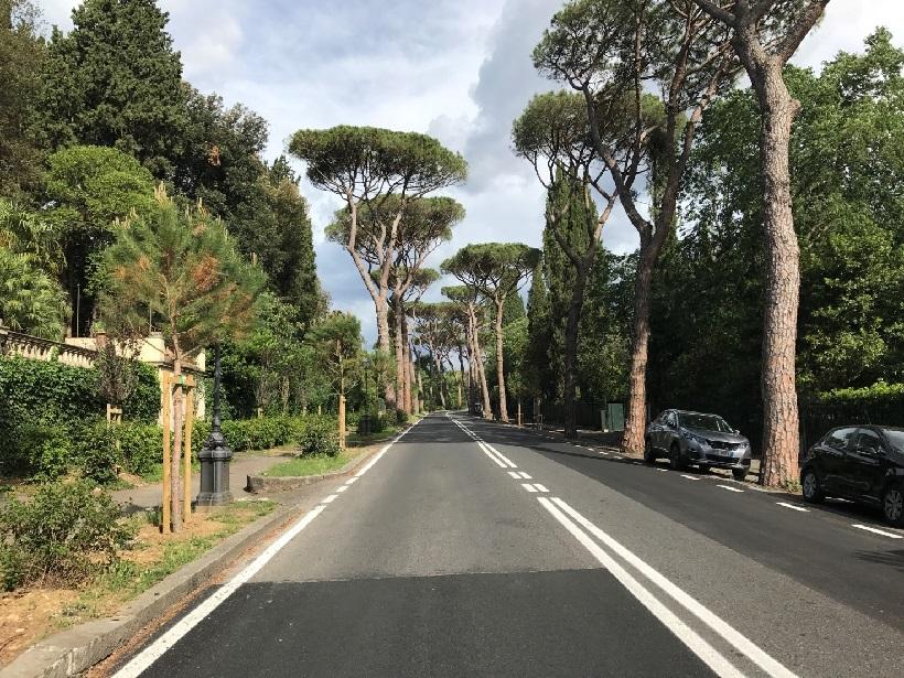 abbattimento alberi firenze privati giardini piante taglio