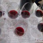 aglianico aglianicone vino vitigno uva vinitaly