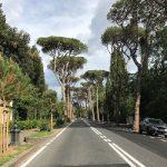 Procedura per la richiesta di autorizzazione all'abbattimento di una pianta privata. Il caso di Firenze