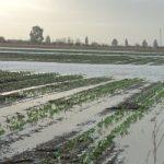 I derivati climatici e la loro possibile applicazione in agricoltura