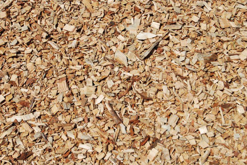 cippato legna legno cippatura chips wood pino conifera