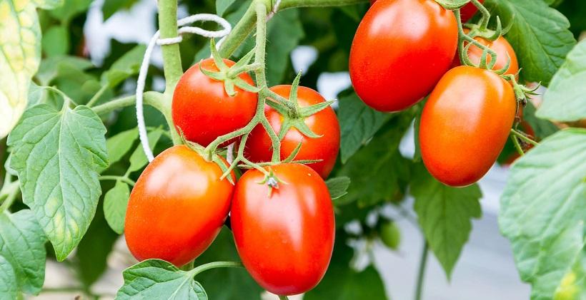 biostimolanti crescita piante