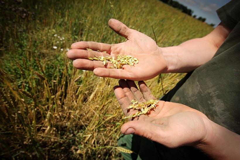 Agricoltura e sviluppo