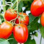 Verso un'agricoltura sostenibile