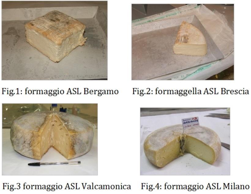 formaggio batteri carica