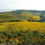 chianti territorio vino vigna