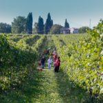 lugana vino 2017 annata lago di garda vendemmia