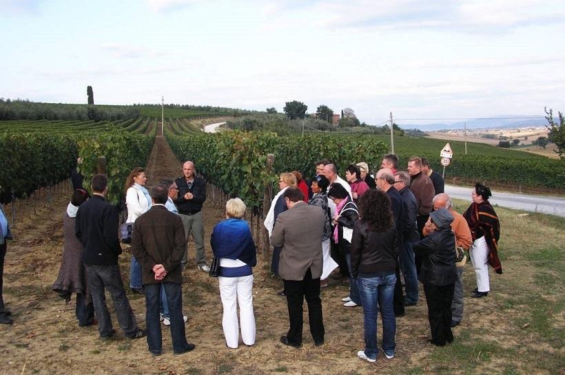 visita cantina vigneto vino vigna