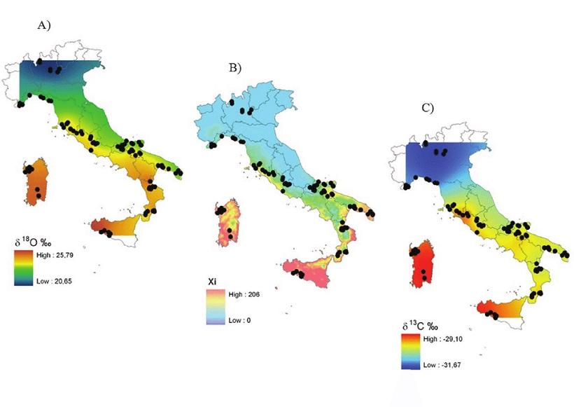 biodiversità olivo olio piante